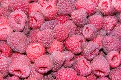 莓果莓 库存图片