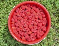 莓果莓14 图库摄影