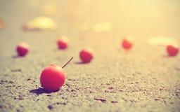 莓果葡萄酒照片在日落的 库存图片
