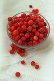 莓果蔓越桔,在一块白色亚麻布前面的结霜的,玻璃板,特写镜头 免版税库存图片