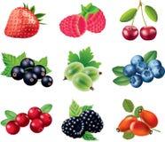 莓果照片拟真的集合 库存图片