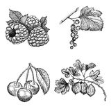 莓果集合 库存照片