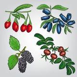 莓果集合 免版税库存图片