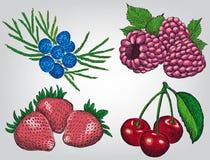 莓果集合 免版税库存照片