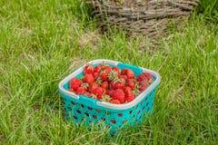 莓果食物和草 库存照片