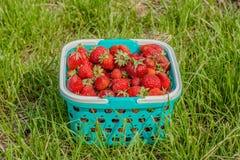 莓果食物和草 免版税库存图片