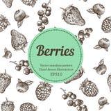 莓果,草莓,黑莓,无核小葡萄干,莓,手拉的无缝的传染媒介样式 自然有机例证 免版税库存图片