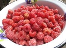 莓果,莓果,颜色,五颜六色,烹饪,点心,饮食,节食,花,食物,生气勃勃,果子,成份,水多,自然,坚果 库存图片