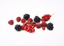 莓果 库存图片