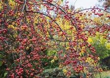 莓果2 库存图片
