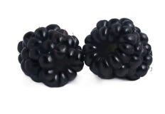 黑莓查出白色 免版税库存图片