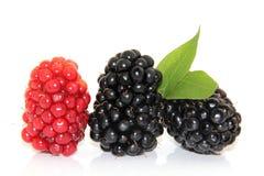 黑莓查出的白色 免版税图库摄影
