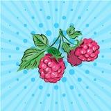 莓甜莓果在一个绿色分支的在蓝色背景 也corel凹道例证向量 手拉在样式流行艺术 库存照片