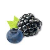 黑莓用蓝莓 库存照片