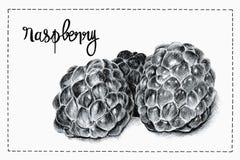 莓的例证 库存例证