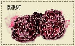 莓的手拉和水彩例证 库存例证