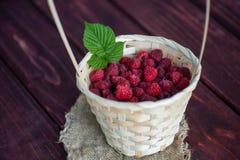莓篮子灌木分支生长 图库摄影
