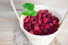 莓篮子灌木分支生长 库存照片