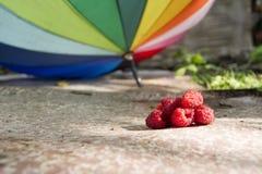 莓篱芭,小径,抛弃,新鲜 图库摄影