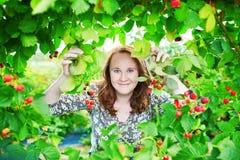 黑莓美丽的女孩采摘莓  免版税图库摄影