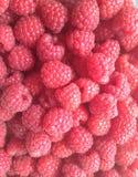 莓背景 免版税库存图片