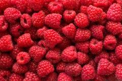 莓背景 免版税库存照片