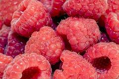 莓背景 库存照片