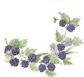 黑莓花圈水彩传染媒介 免版税库存照片