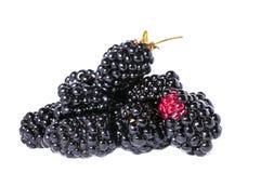 黑莓莓果 免版税库存照片