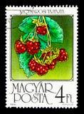 莓,果子serie,大约1986年 免版税库存照片