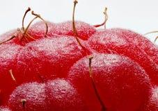 莓(极端宏指令) 库存照片