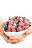 黑莓冻结的莓 库存照片
