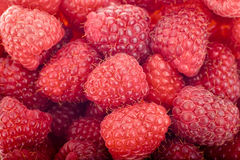 莓 免版税库存图片