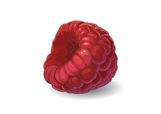 莓 库存例证
