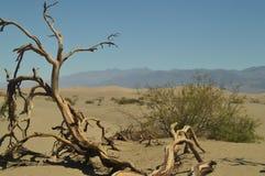 莫哈维族沙漠的美妙的看法烘干树干 在海平面下的最低的地方 硕大盐盐水湖 旅行holydays Geolo 库存照片