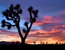 莫哈韦沙漠日落 库存图片