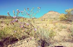 莫哈韦沙漠风景 库存图片