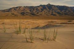 莫哈韦沙漠 免版税库存照片
