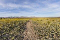 莫哈维沙漠在Amboy火山口附近的春天野花 免版税图库摄影