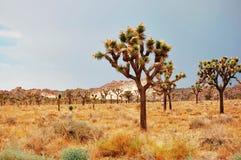 莫哈维沙漠 库存照片