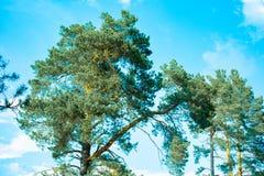 莫斯科地区的自然公园,美好的绿色,美丽的树 免版税库存图片