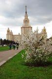 莫斯科大学 苹果开花的结构树 库存照片