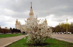 莫斯科大学 苹果开花的结构树 免版税库存图片