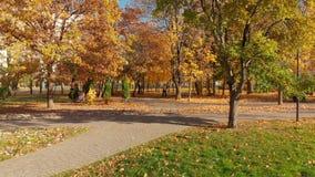 莫斯科,俄罗斯- 10月17 2018年 秋天公园在晴天在Zelenograd 股票录像