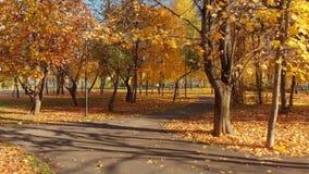 莫斯科,俄罗斯- 10月17 2018年 秋天落叶公园在晴天在泽列诺格勒 影视素材