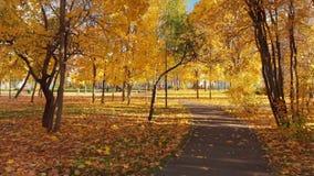 莫斯科,俄罗斯- 10月17 2018年 秋天落叶公园在晴天在泽列诺格勒 股票录像