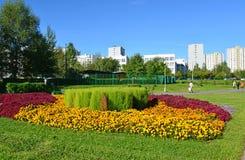 莫斯科,俄罗斯- 9月01 2016年 花床在Zelenograd在莫斯科,俄罗斯 免版税库存图片