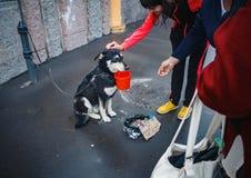 莫斯科,2014年4月26日:被栓的狗请求在街道的施舍 抚摸狗的传球手 所有者使用动物 库存照片