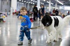 莫斯科- 2018年5月06日:在番红花商展的国际狗展示`欧亚大陆` 有他的Landseer狗品种的小男孩 库存图片