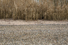 莱茵河的岸 库存图片